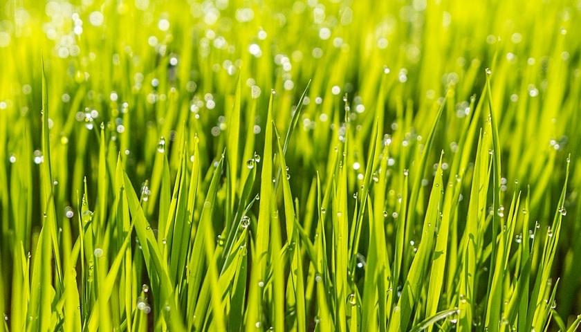 Chytrý trávník