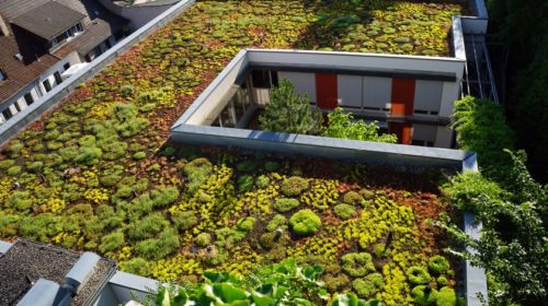 Výzkum zdůrazňuje rostoucí trendy zelených střech a zeleného betonu